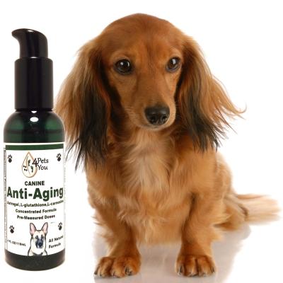 Canine Anti-Aging