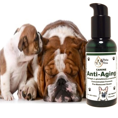 Canine Anti-Aging